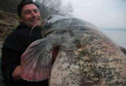 Wallertour Wallertrip Wallerangeln Wallerfischen Gewässervorstellungen